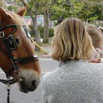 Horses. Photography by Adele J. Haft, adelehaft@gmail.com