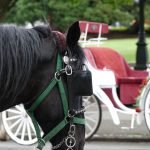 Horse and Carriage. Photography by Adele J. Haft, adelehaft@gmail.com