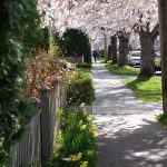 South Turner Street in the Spring. Photography by Adele J. Haft, adelehaft@gmail.com