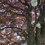 Teacup Tree on Clarence Street. Photography by Adele J. Haft, adelehaft@gmail.com